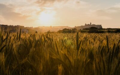 Law on agricultural leases is declared to breach owners' fundamental human rights: Now what?